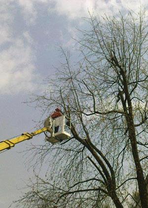 Baumarbeiten Garten- und Landschaftsbau Galabau Winnen